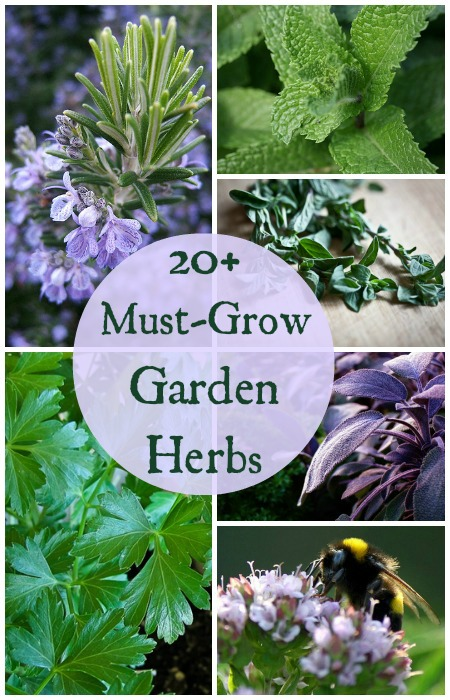 Delightful Must Grow Herbs For Your Garden Guide