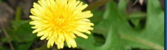 Weeds – Identify and Manage by Claudia Fugate