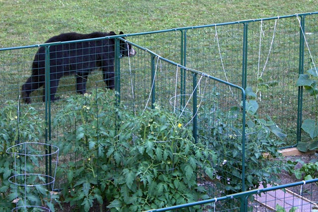 Garden Defender Bear Protected