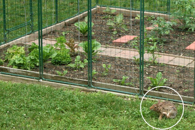 Electric Garden Fence For Rabbits Fence Designs and Ideas